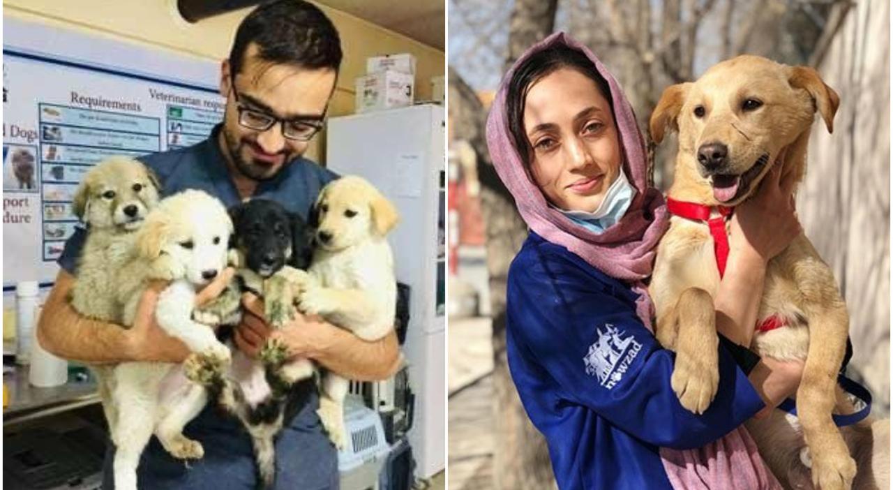 Afghanistan, le truppe britanniche salvano 170 tra cani e gatti: «E ora troveranno una famiglia»