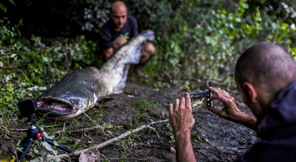 Roma, nel Tevere pesci siluro da 100 chili: l ultima sfida è catturarli