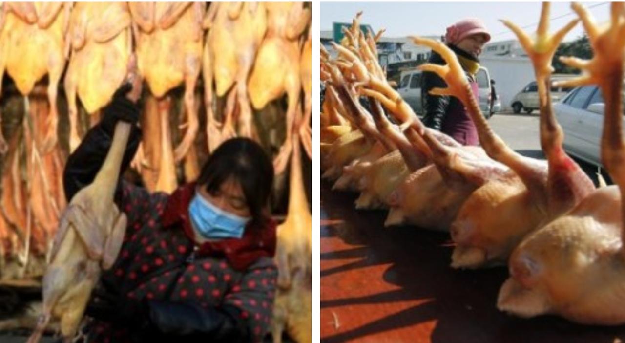 """Influenza aviaria, in Cina il primo caso di un uomo contagiato dal virus H10N3"""": è allarme"""