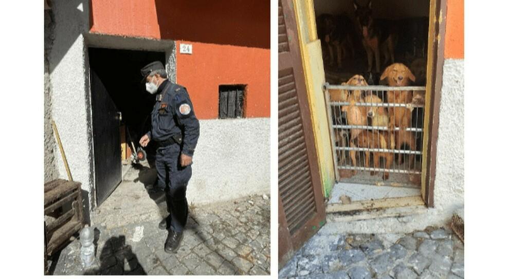Allucinante, vive con 40 cani in una stanza: denunciato per maltrattamento di animali