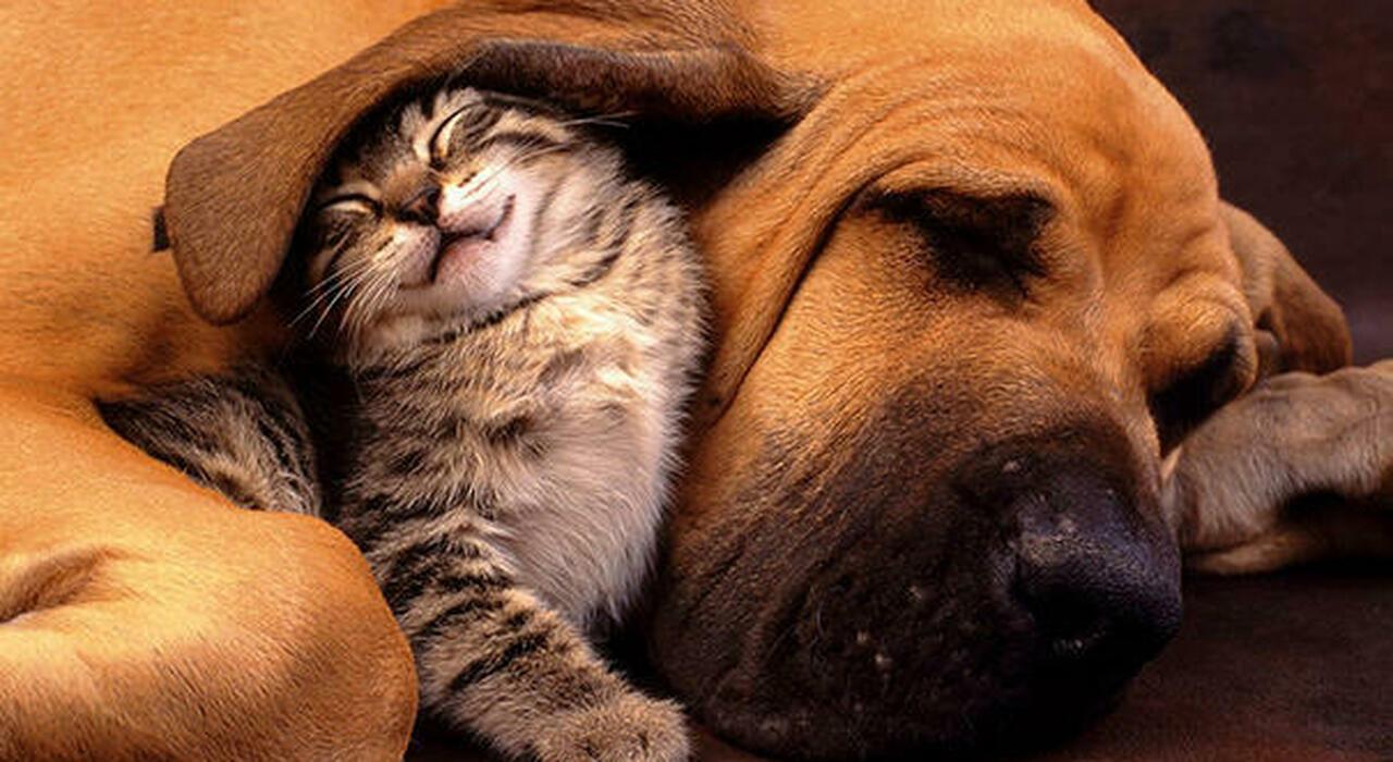 Bonus cani e gatti 2021, aumenta il rimborso per le spese: ecco come ottenerlo