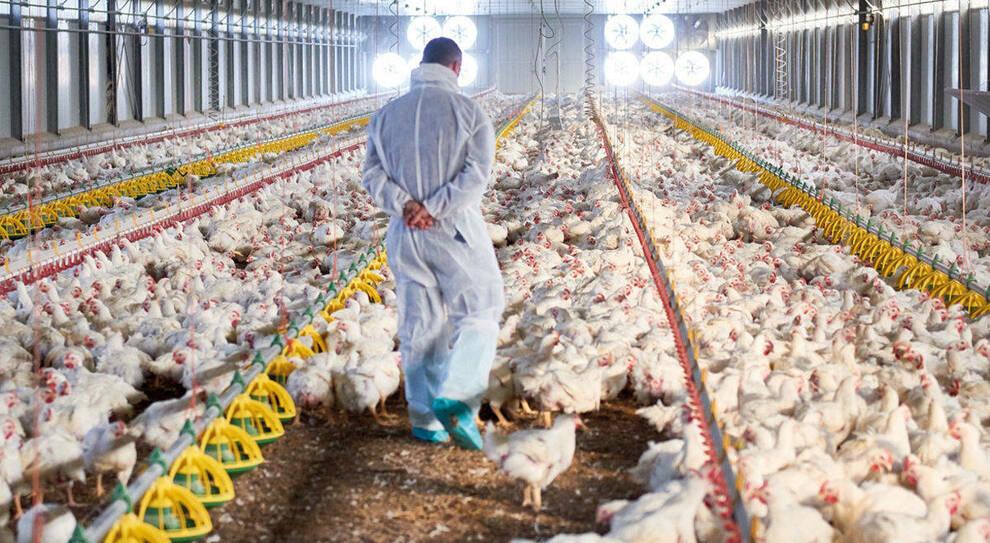 Carne, il nuovo piano Ue fa infuriare gli allevatori
