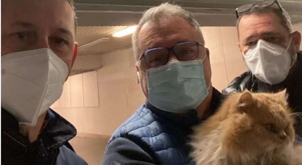 Ritrovato Grisù, il gatto cacciato dal treno a Pescara: sta bene