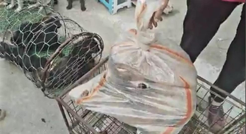 Gatti infilati nel sacco in vendita al mercato vietnamita (immagini e video pubbl dall'ass We are not Food su Fb)