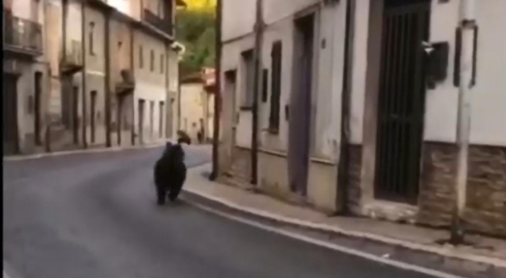 Abruzzo, catturato e battezzato l'orsetto impertinente: si chiamerà Juan Carrito