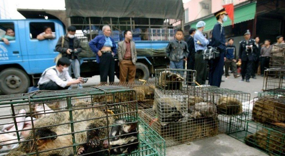 btc commercio di animali vivi