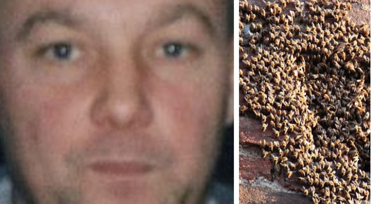 Anagni, muore sul tetto di casa assalito da uno sciame di vespe: aveva 52 anni