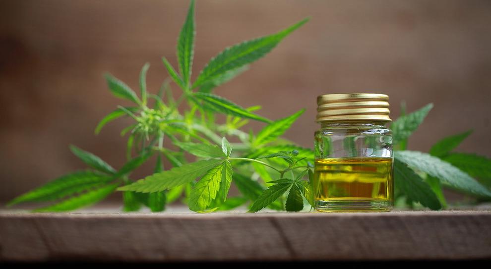 Covid, estratti di cannabis potrebbero ridurre il rischio di morte: lo studio canadese