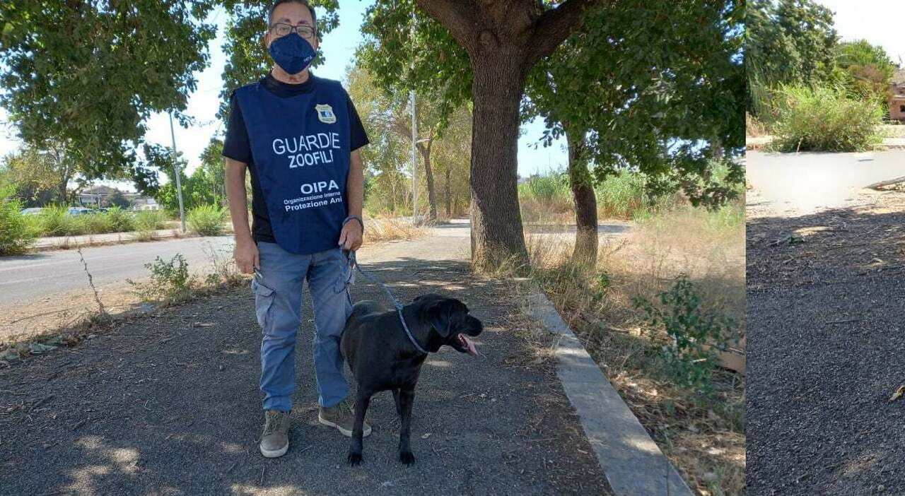 Roma, gli hacker mandano in tilt anche l anagrafe dei cani