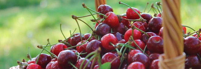 Dieta, quante calorie hanno le ciliegie? Ecco perché mangiarle fa bene