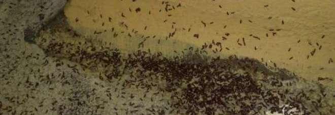 Usa costretti a fuggire dall 39 appartamento infestato di for Puntura cimice