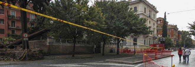 Crollano alberi, la cura è low cost I tecnici: «Solo 2 euro a controllo»