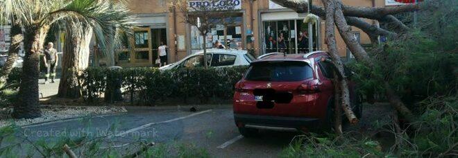Albero cade a Santa Severa: quattro auto danneggiate