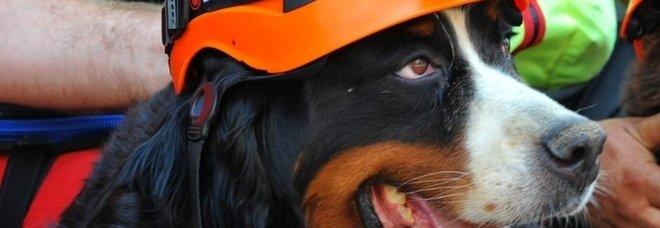 Addio Kreole, il cane dei vigili del fuoco aiutò i soccorsi da Amatrice al Ponte Morandi