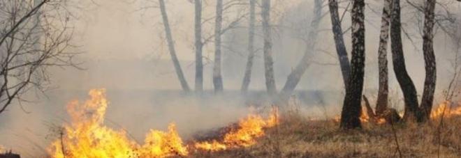 Incendi di boscaglia vicino alle abitazioni domato dopo molte ore