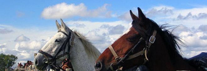 I cavalli comunicano muovendo le orecchie. La ricerca inglese: «Ma usano anche gli occhi»