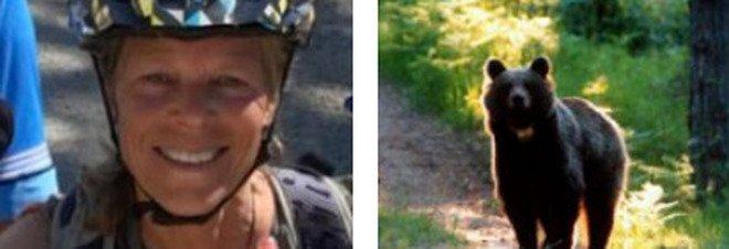 Montana, orso trascina fuori dalla tenda una donna e la sbrana: ucciso dopo inseguimento di 3 giorni