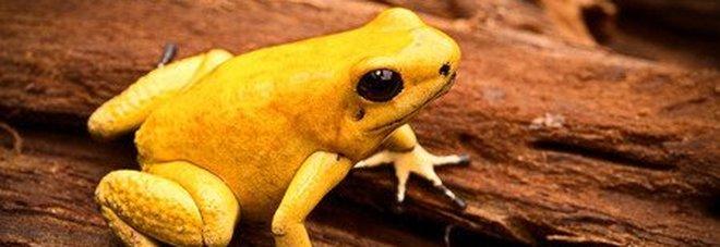 Dal cobra asiatico alla rana freccia: ecco gli animali più pericolosi al mondo