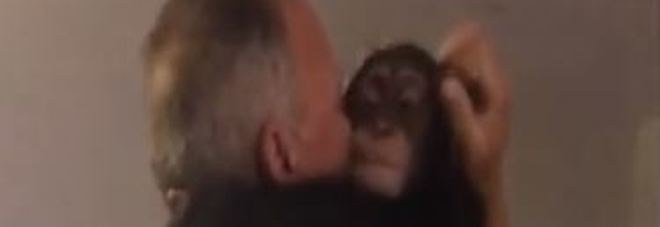 Lo scimpanzé ritrova la coppia che lo aveva salvato, l'incontro è emozionante