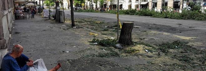 Gli alberi tagliati a via Leone IV