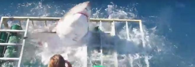 Choc in Messico, lo squalo bianco entra nella gabbia del sub