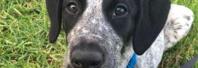 Nuova zelanda cane anti bomba in fuga sulla pista dell for Cane nella cabina dell aereo