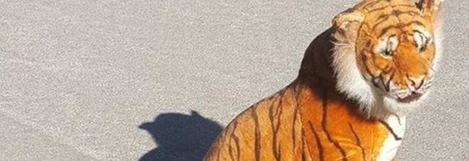 Scozia, polizia impegnata in una delicata operazione di messa in sicurezza, ma la tigre era solo un peluche