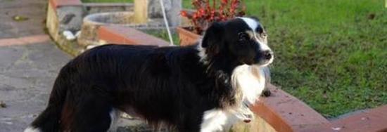 Torri del benaco il cane fa pip sul cestino multa di - Quando fare il primo bagno al cane ...