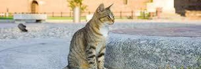 Coronavirus, gatto positivo a Hong Kong: la sua padrona era stata contagiata