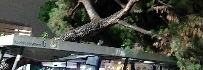 Roma, albero crolla sulla pensilina del bus: paura alla Stazione Termini