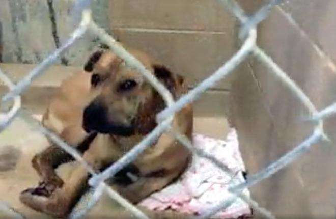 Usa bimba di 3 giorni sbranata dai cani in casa la mamma l 39 aveva lasciata sola sul divano - Perche i cani scavano sul divano ...