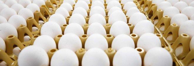 Hong Kong vieta l'importazione di uova e pollame da Padova: «Epidemia di aviaria»