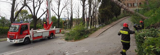 Maltempo, le forti raffiche di vento fanno cadere alberi, rami e coppi in tutta la provincia di Perugia. In azione i vigilid le fuoco