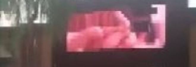 Ebano ermafrodita porno