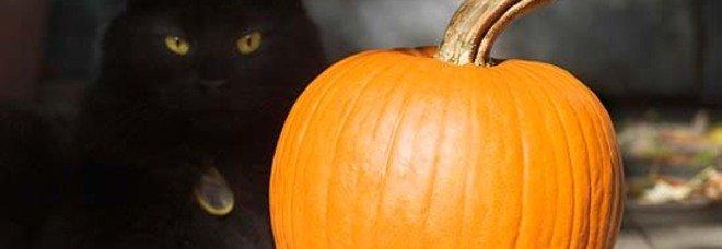 Strage di gatti neri per Halloween: «Ci fanno i riti satanici, attenti al vostro»