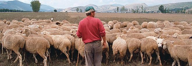 Allarme alimentare per 150 mila animali rubati e macellati