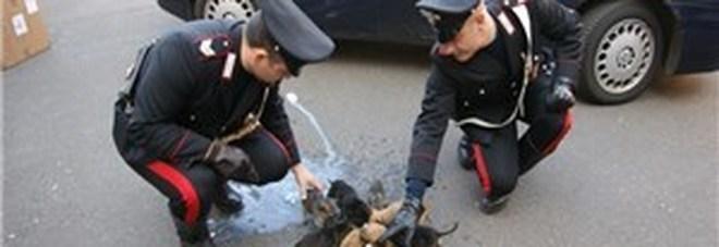 Lite fra vicini di casa, per ripicca uccide con un colpo di pistola il cagnolino di un'anziana a Vibo Valentia