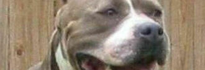 Bambina di tre mesi muore sbranata da un cane. È successo in Irlanda