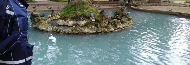 Terni il laghetto della passeggiata colorato di blu for Laghetto per papere