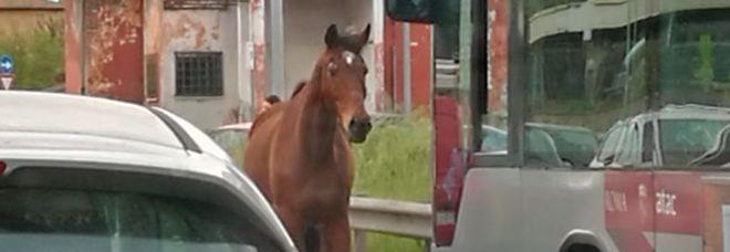 Il cavallo sulla via Appia a Roma