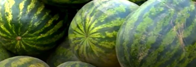 Dieta, quante calorie ha l'anguria? Benefici e proprietà del frutto dell'estate