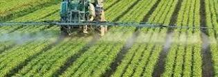 L'uso dei pesticidi causa obesità e diabete: scoperta choc dei ricercatori francesi