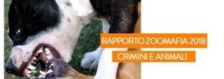 Maltrattamenti sugli animali, in Italia un reato ogni 55 minuti