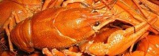 Aragosta e filetti di branzino in provetta: dopo la carne dagli Usa arriva il pesce