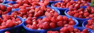 Nemi, ritorna la sagra delle fragole: al via il 3 giugno