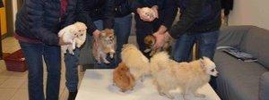 Ladro entra in casa e ruba sei cuccioli: i cani stavano rischiando di morire