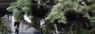 Firenze, albero crollato: la procura indaga per lesioni