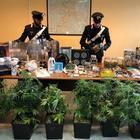 Avevano in casa una serra di marijuana e oltre 700 grammi di droga: arrestata una coppia
