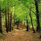 Ladispoli, riaperto il bosco di Palo Laziale: sarà possibile celebrare i matrimoni civili