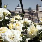 La rosa più bella della Capitale, via al contest su Instagram